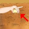 Comment ajuster le ph du sol
