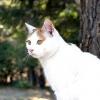 Comment adopter un chat si vous avez déjà une