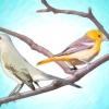 Comment attirer les oiseaux