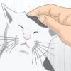 Comment être un ami avec les chats