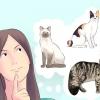 Comment reproduire chats