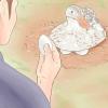 Comment reproduire canards