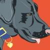 Comment bâtir la confiance avec un chien maltraité