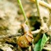 Comment prendre soin d'un escargot petit-gris