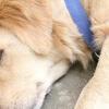 Comment prendre soin d'un chien après qu'il a vomi