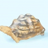 Comment prendre soin d'un tortue léopard