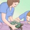 Comment prendre soin de la tortue non tropicale
