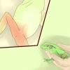 Comment prendre soin de la grenouille malades avec la maladie de la jambe rouge