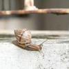 Comment prendre soin d'un escargot ou limace