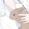 Comment prendre soin d'un lapin éternuements