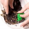 Comment prendre soin de cloportes