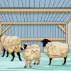 Comment prendre soin de moutons