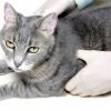 Comment prendre soin de les bandages de votre animal