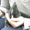 Comment prendre soin de votre lapin après la castration