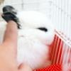Comment mener à bien un lapin