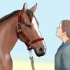 Comment attraper un cheval
