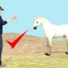 Comment attraper un cheval sauvage