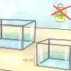 Comment changer l'eau de votre poisson betta