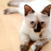 Comment vérifier les chats pour déshydratation