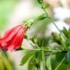 Comment choisir une fleur pour une date