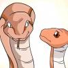 Comment choisir votre premier serpent de compagnie
