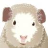 Comment choisir le nom de votre cochon de guinée
