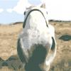 Comment choisir votre cheval