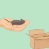 Comment nettoyer votre cage de la souris pour animaux de compagnie