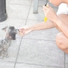 Comment clicker former votre chien à rester