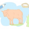 Comment recueillir le sperme d'un taureau pour un examen de la solidité de reproduction