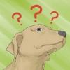 Comment faire face à l'épilepsie canine