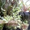 Comment créer un jardin de fleurs rustique