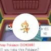 Comment créer l'équipe de pokemon parfaite