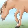 Comment faire pour guérir les coliques chez les chevaux et poneys