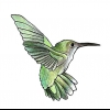 Comment dessiner colibris