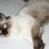 Comment faire face à un chat qui vient de se stériliser
