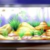 Comment choisir la race de corydoras est le mieux pour votre aquarium