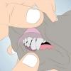 Comment déterminer l'âge de votre chien par ses dents