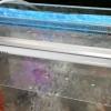 Comment faire un changement d'eau dans un aquarium d'eau douce