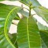Comment faire les dix principes éthiques de patanjali (yoga sutra)