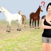 Comment attraper facilement votre cheval