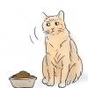 Comment encourager votre chat à manger