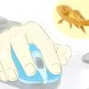 Comment nourrir un poisson