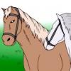 Comment nourrir un cheval friandises autour d'autres chevaux