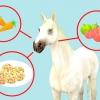 Comment nourrir un cheval friandises