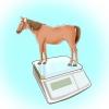 Comment nourrir un cheval