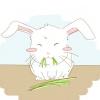 Comment nourrir un lapin de maison
