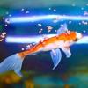 Comment nourrir les poissons rouges