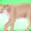 Comment parer à un lion de montagne