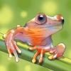 Comment trouver les tritons et les grenouilles